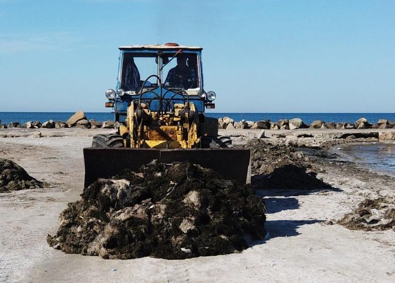 С бердянских пляжей вывезли 44 тонны водорослей , фото-1