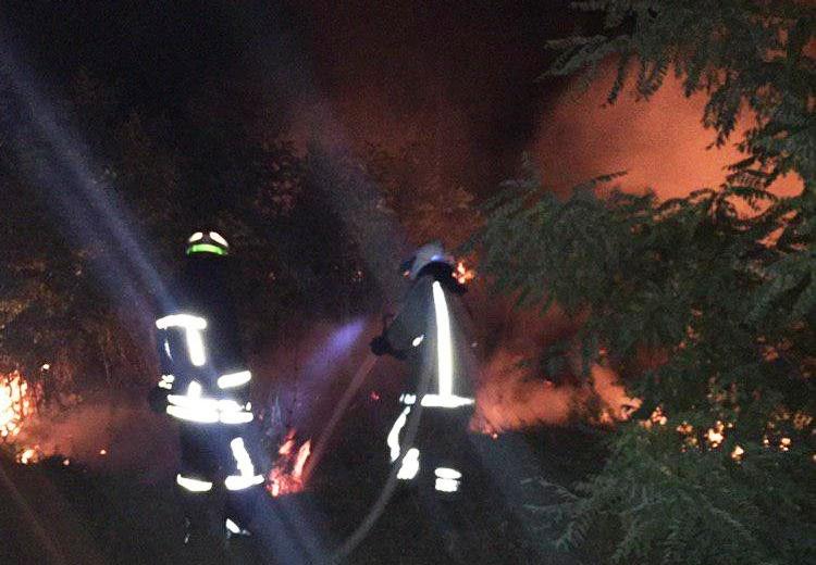 В Запорожской области на выходных произошло 116 пожаров в экосистемах, – ФОТО, фото-1