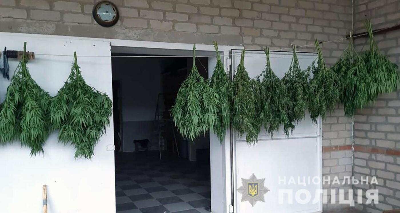 60-летний мелитополец вырастил во дворе большие кусты марихуаны, - ФОТО, фото-2