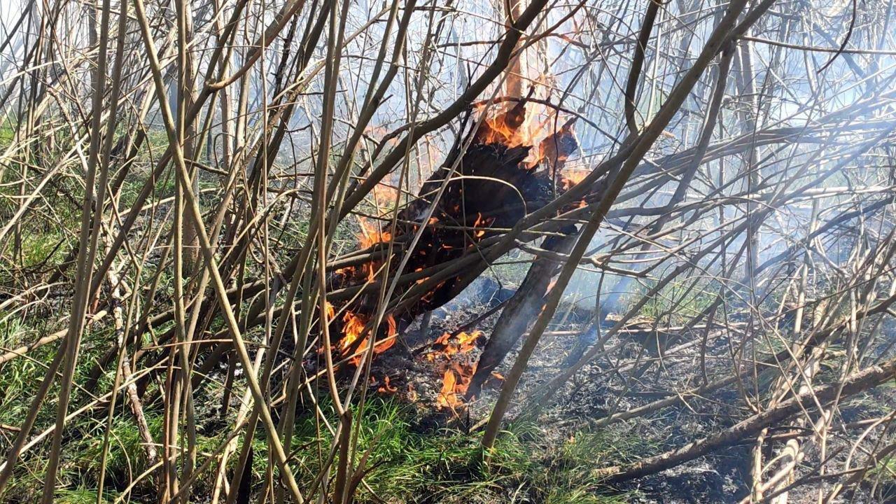 За сутки запорожские пожарные 10 раз выезжали тушить пожары в экосистемах, фото-1