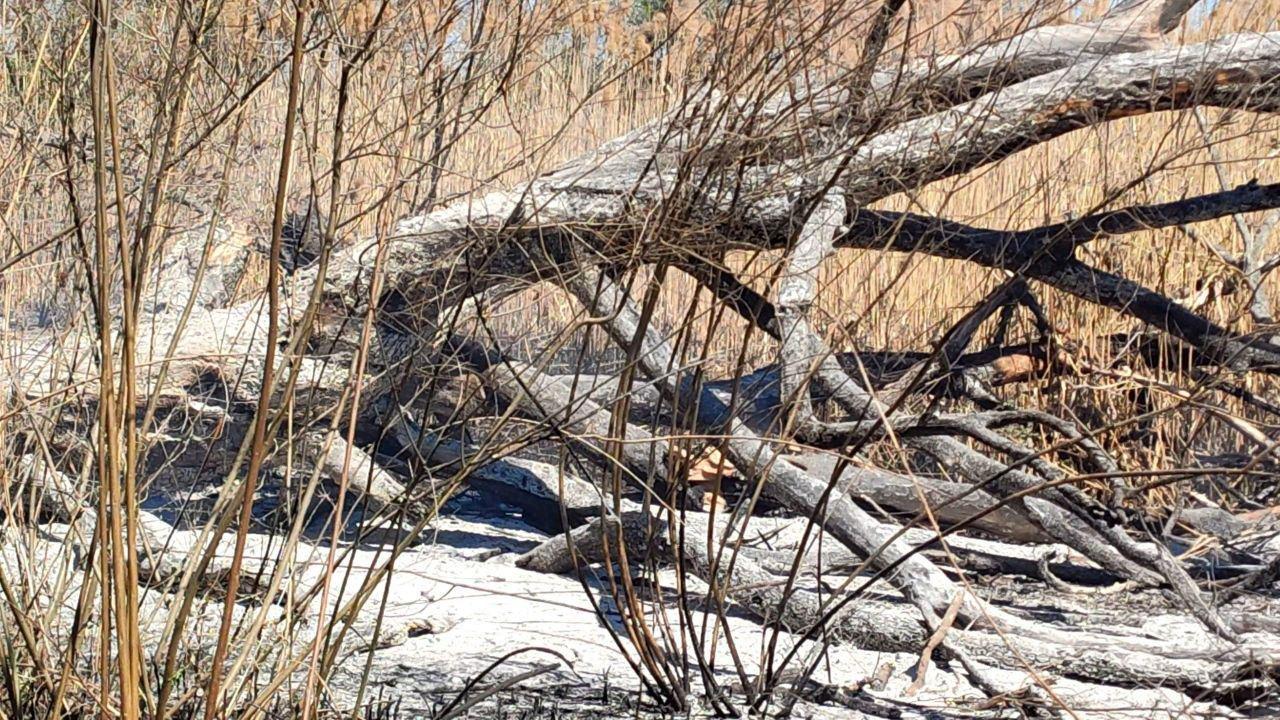 За сутки запорожские пожарные 10 раз выезжали тушить пожары в экосистемах, фото-3