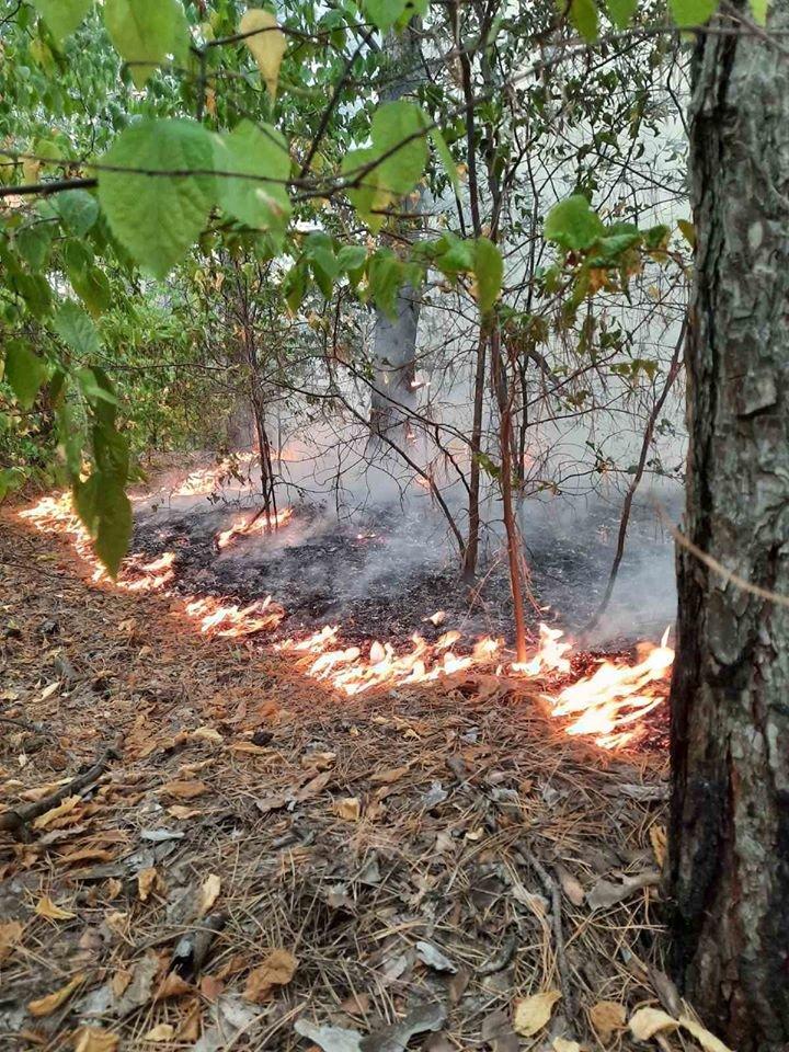 За сутки в Запорожской области случилось 16 пожаров в экосистемах: один в лесу, - ФОТО, фото-1