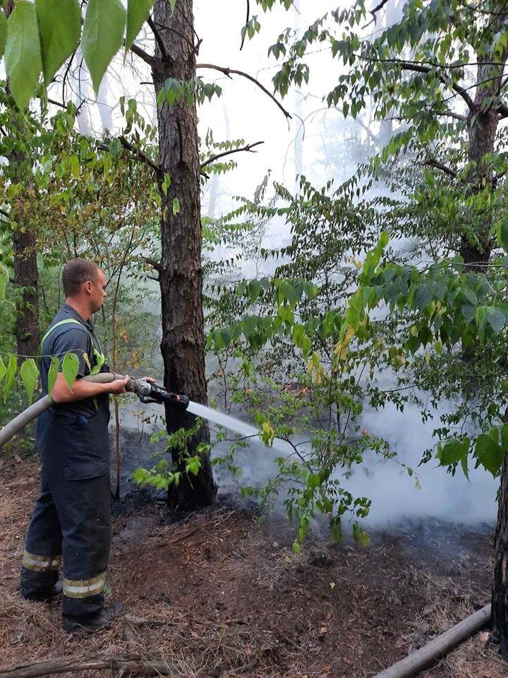 За сутки в Запорожской области случилось 16 пожаров в экосистемах: один в лесу, - ФОТО, фото-3