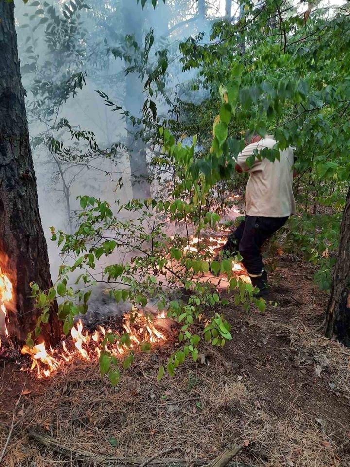 За сутки в Запорожской области случилось 16 пожаров в экосистемах: один в лесу, - ФОТО, фото-2
