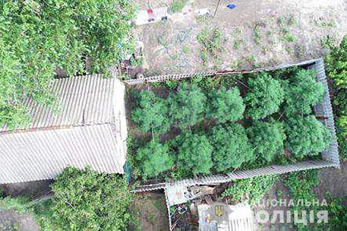 Запорожские полицейские с помощью дрона нашли два посева конопли, - ФОТО, фото-1