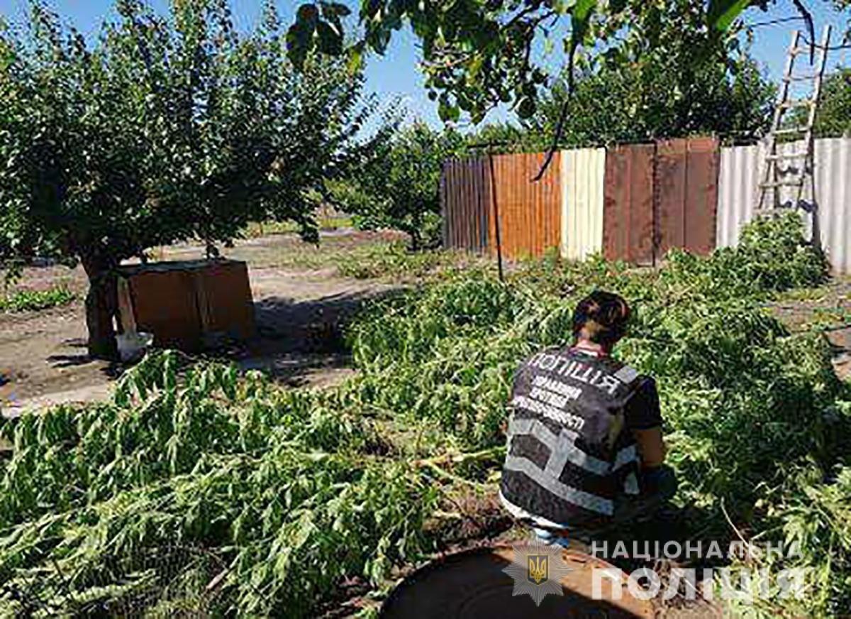 Запорожские полицейские с помощью дрона нашли два посева конопли, - ФОТО, фото-3