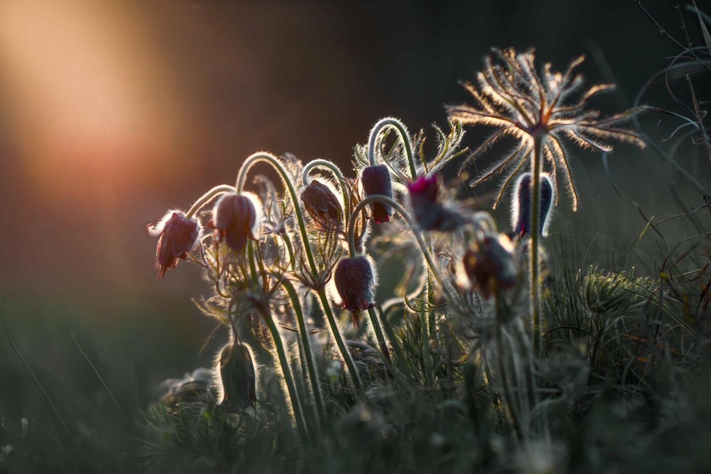 На закате и после грозы: запорожские фотографы делятся снимками цветущей Хортицы, - ФОТО, фото-7