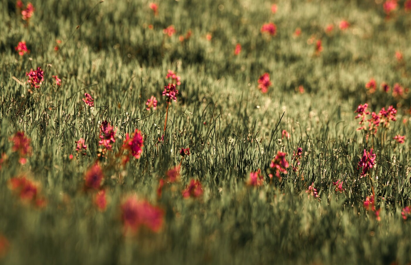 На закате и после грозы: запорожские фотографы делятся снимками цветущей Хортицы, - ФОТО, фото-12