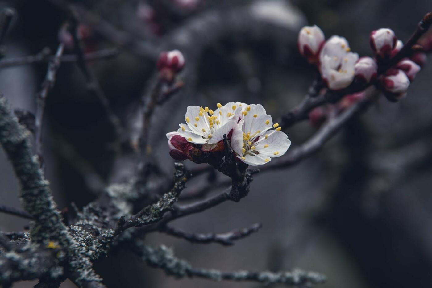 На закате и после грозы: запорожские фотографы делятся снимками цветущей Хортицы, - ФОТО, фото-22