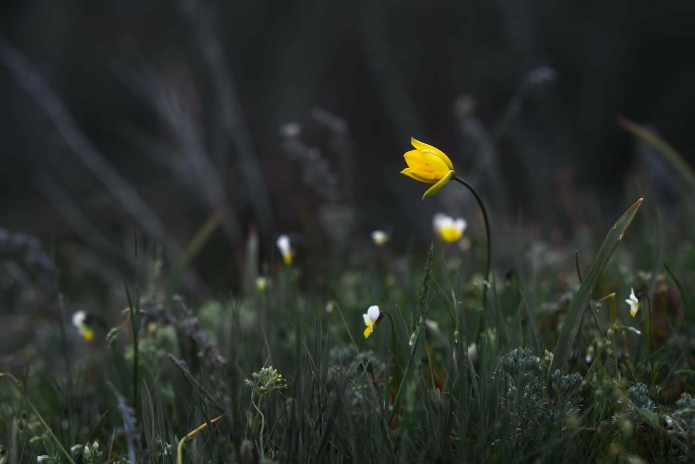 На закате и после грозы: запорожские фотографы делятся снимками цветущей Хортицы, - ФОТО, фото-9