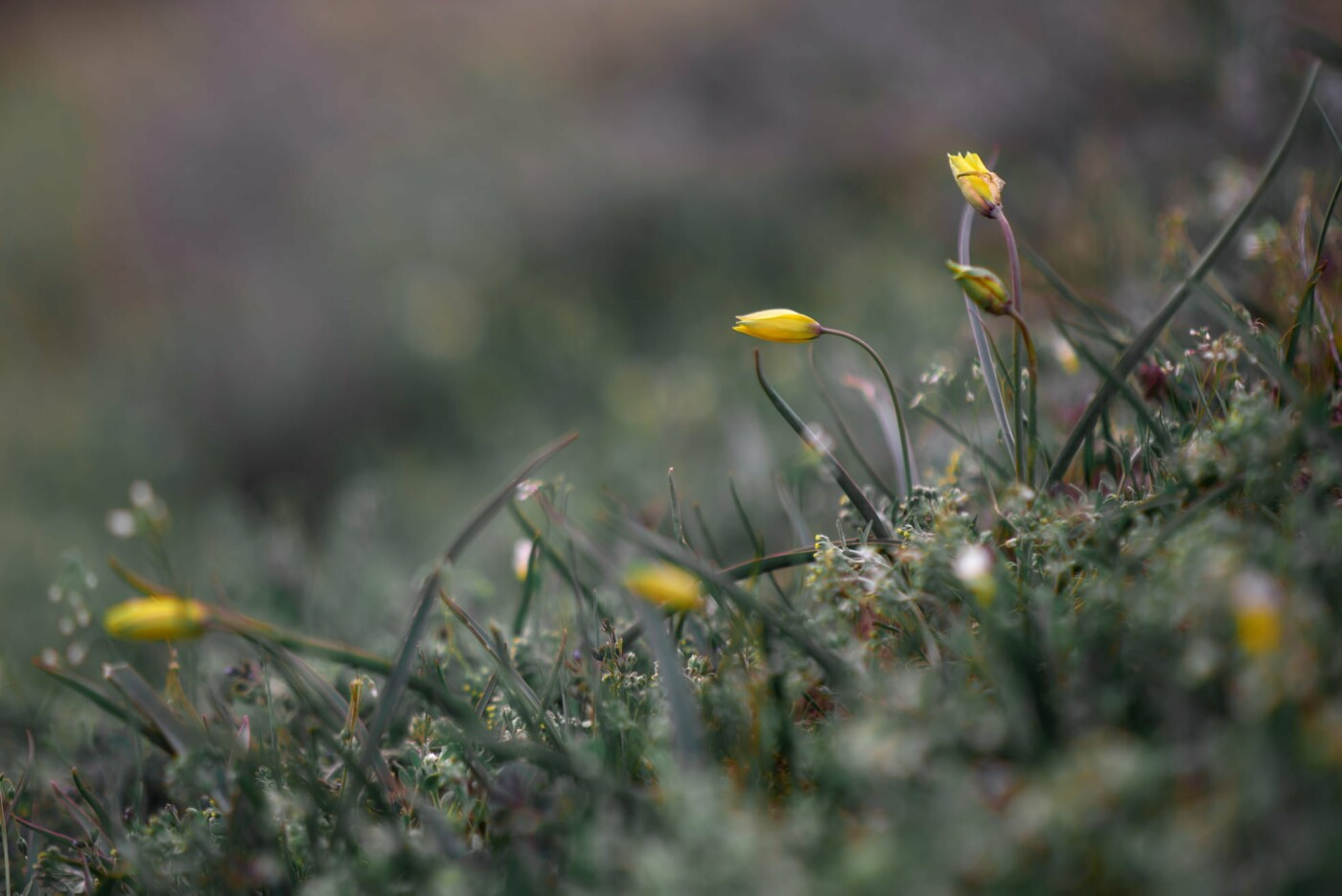 На закате и после грозы: запорожские фотографы делятся снимками цветущей Хортицы, - ФОТО, фото-10