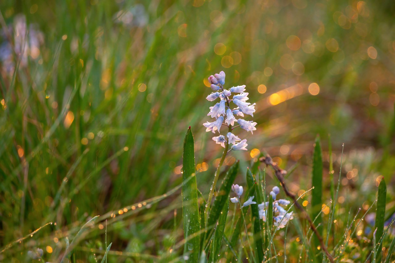 На закате и после грозы: запорожские фотографы делятся снимками цветущей Хортицы, - ФОТО, фото-3