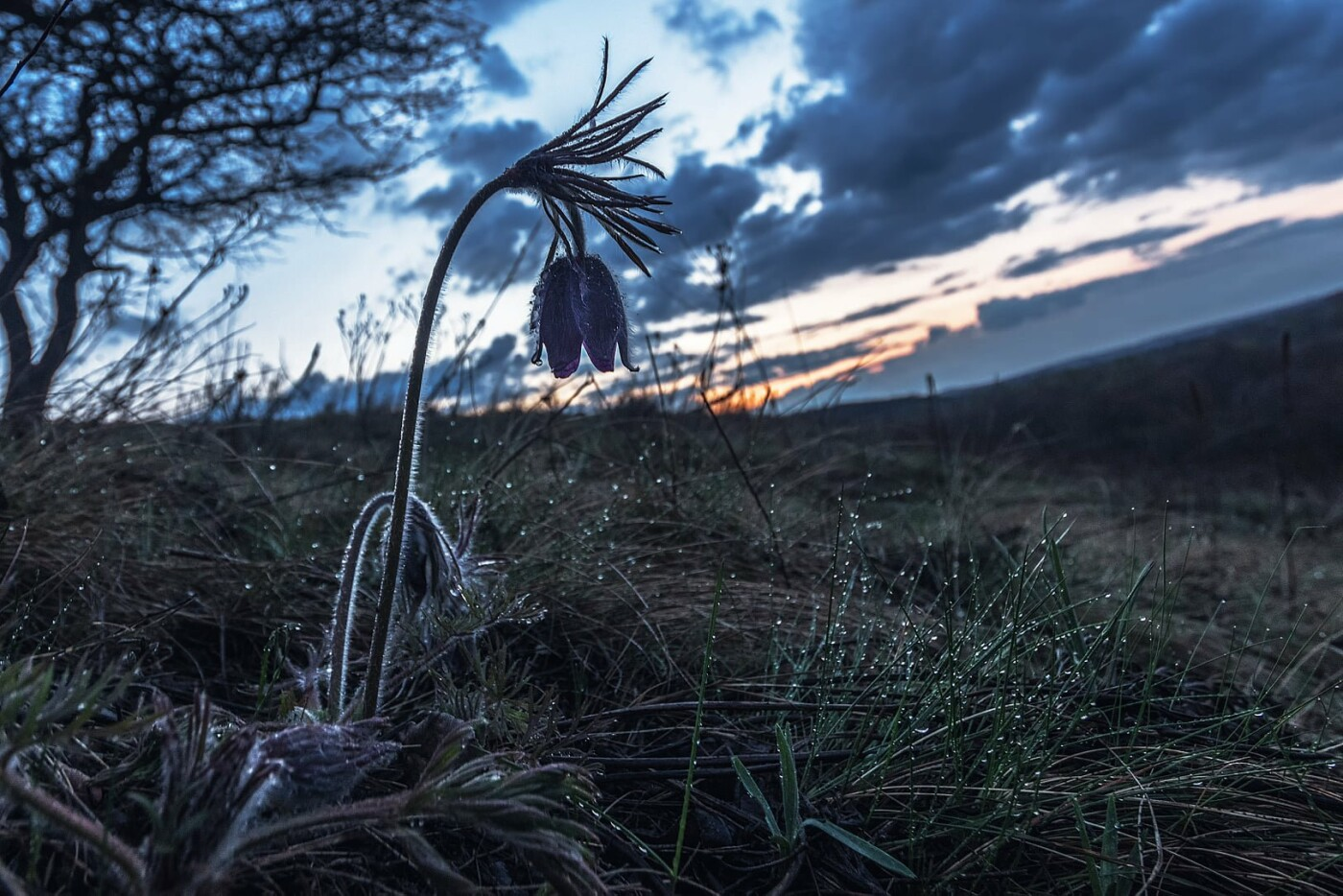 На закате и после грозы: запорожские фотографы делятся снимками цветущей Хортицы, - ФОТО, фото-26