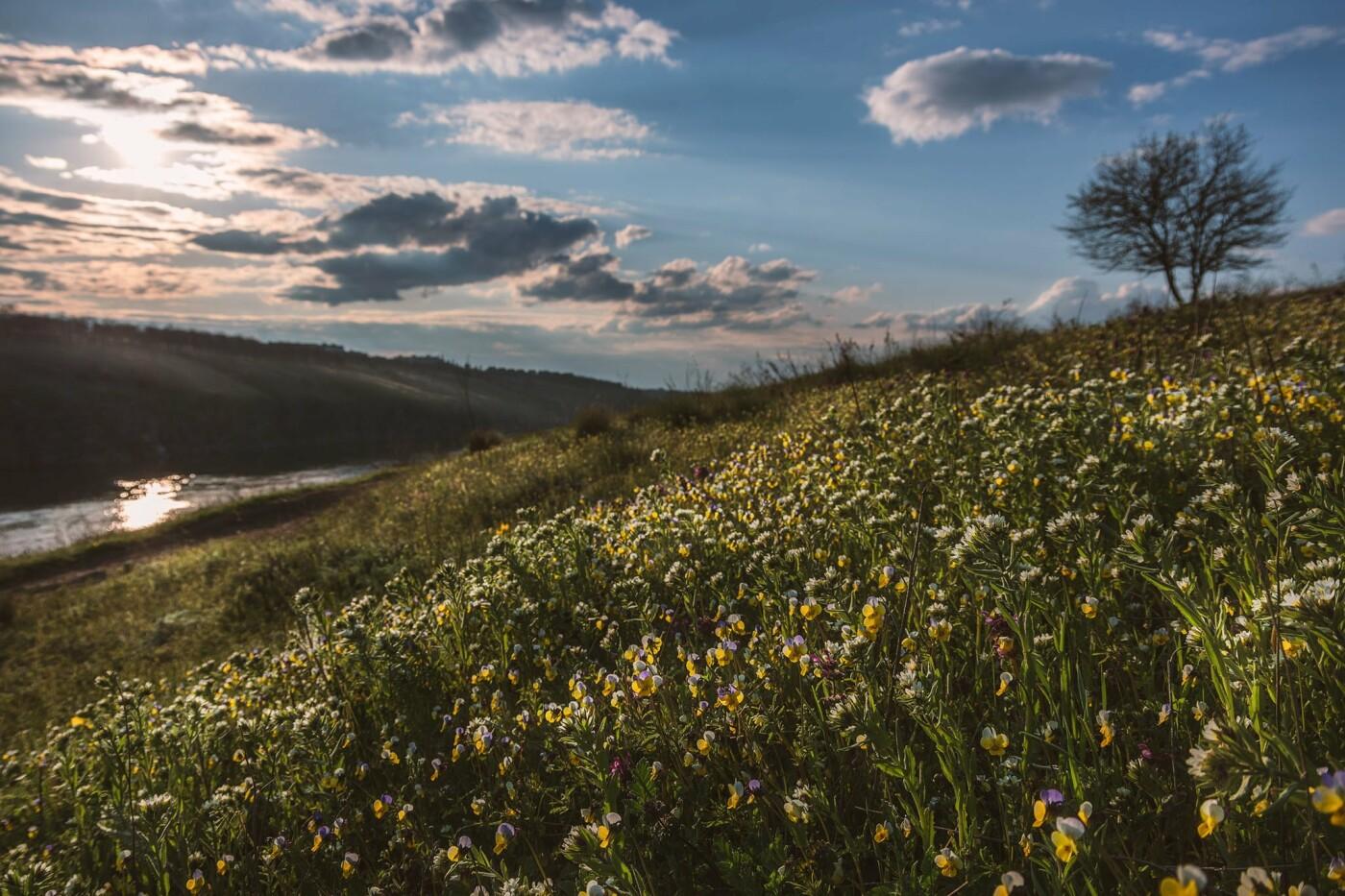 На закате и после грозы: запорожские фотографы делятся снимками цветущей Хортицы, - ФОТО, фото-20