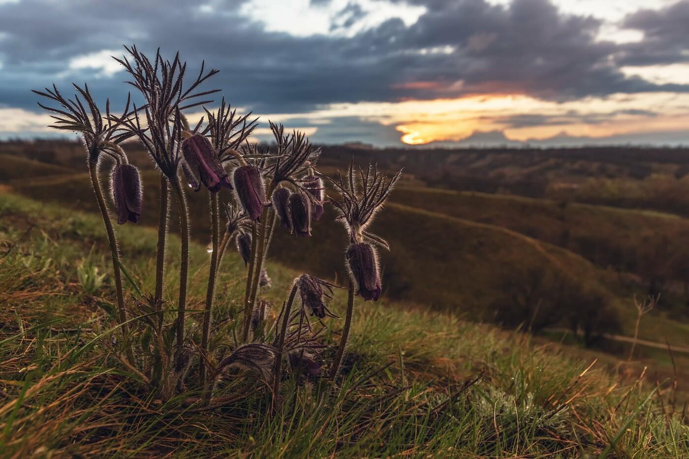 На закате и после грозы: запорожские фотографы делятся снимками цветущей Хортицы, - ФОТО, фото-28